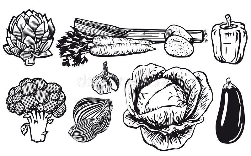Line drawing of assorted vegetables royalty free illustration