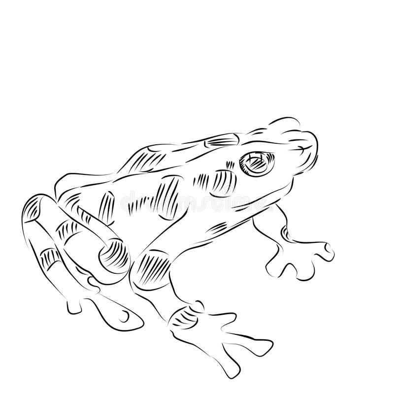 download line drawing of a golden frog stock illustration image 56677795