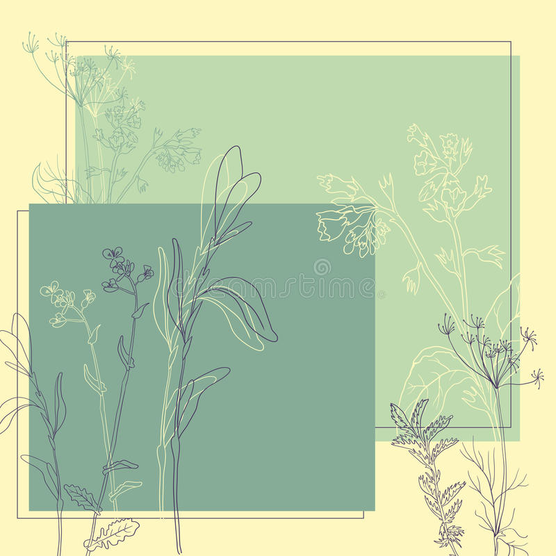 Download Line drawing herbs stock vector. Image of grass, herbs - 32790656