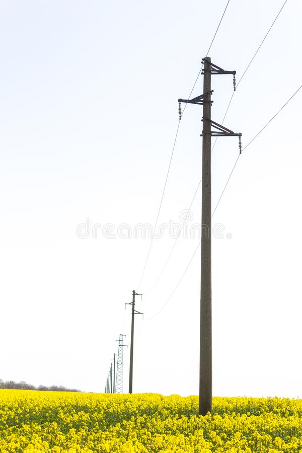 A line of electric poles with cables of electricity in a rape field with a forest in background. Vertical stock photos