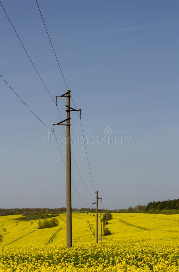A line of electric poles with cables of electricity in a rape field with a forest in background. Vertical stock photography