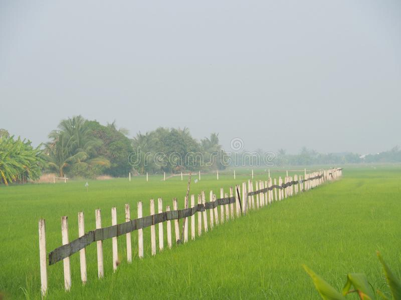 The line of fence in the rice field at Thai countryside, Morning light fog With the concept of rural life, nature, simplicity, ref. Reshing, beautiful, homeland stock photo