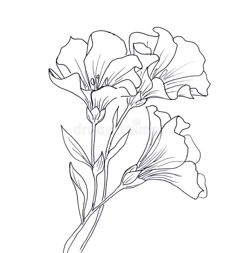 Line ink drawing of flower vector illustration