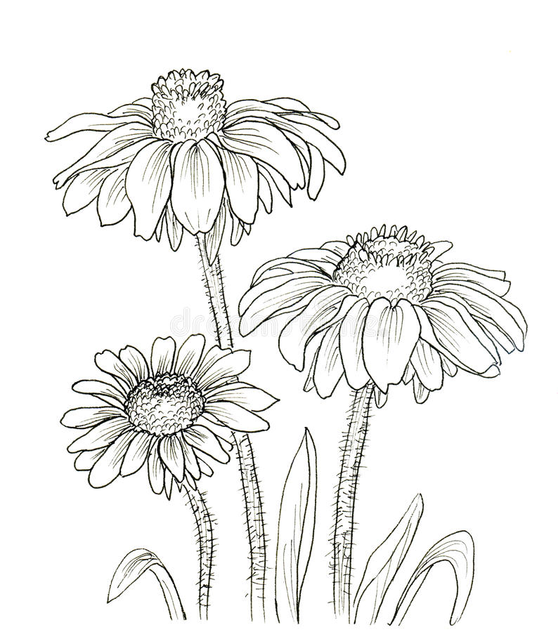 Line Drawing Picture Of Flower : Line ink drawing of flower stock illustration