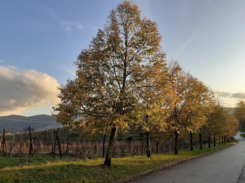 Line of lime tree in beautiful colours of autumn royalty free stock photos