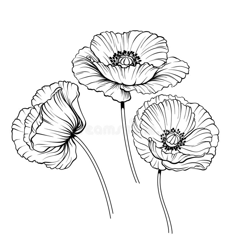 Poppy Line Drawing Tattoo : Line poppies vector set stock illustration of