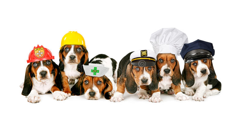 Line of puppies in work hats royalty free stock photography