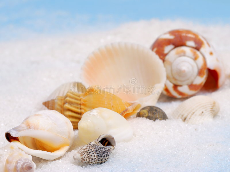 Line of sea shells. Shallow focus on diagonal line of little seashells and white sand stock photo