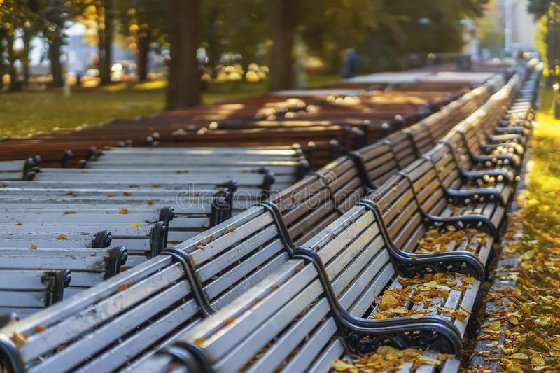 Line of shifted park benches, autumn sunny dayending of season, falling leaves, autumn mood, sadness royalty free stock photography