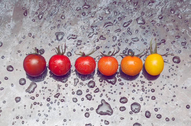 Line of tomatoes. Perfect color gradation line of diverse kinds of tomatoes on wet surface royalty free stock image