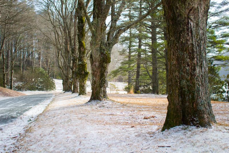 Line of trees along a walking path royalty free stock photos