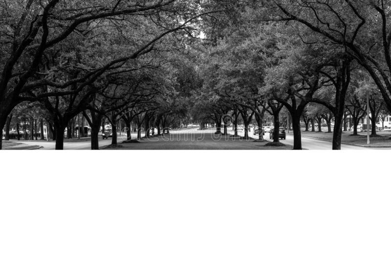 Line of Trees Black and White stock image