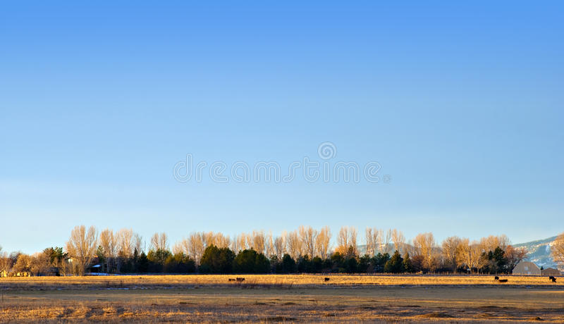 Line of Trees on the Horizon. Line of pine and elm trees on the horizon on the Colorado prairie royalty free stock images