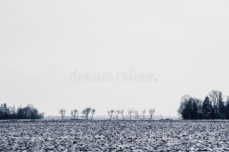 A line of trees on horizon in the snowy fields. Lithuania royalty free stock images