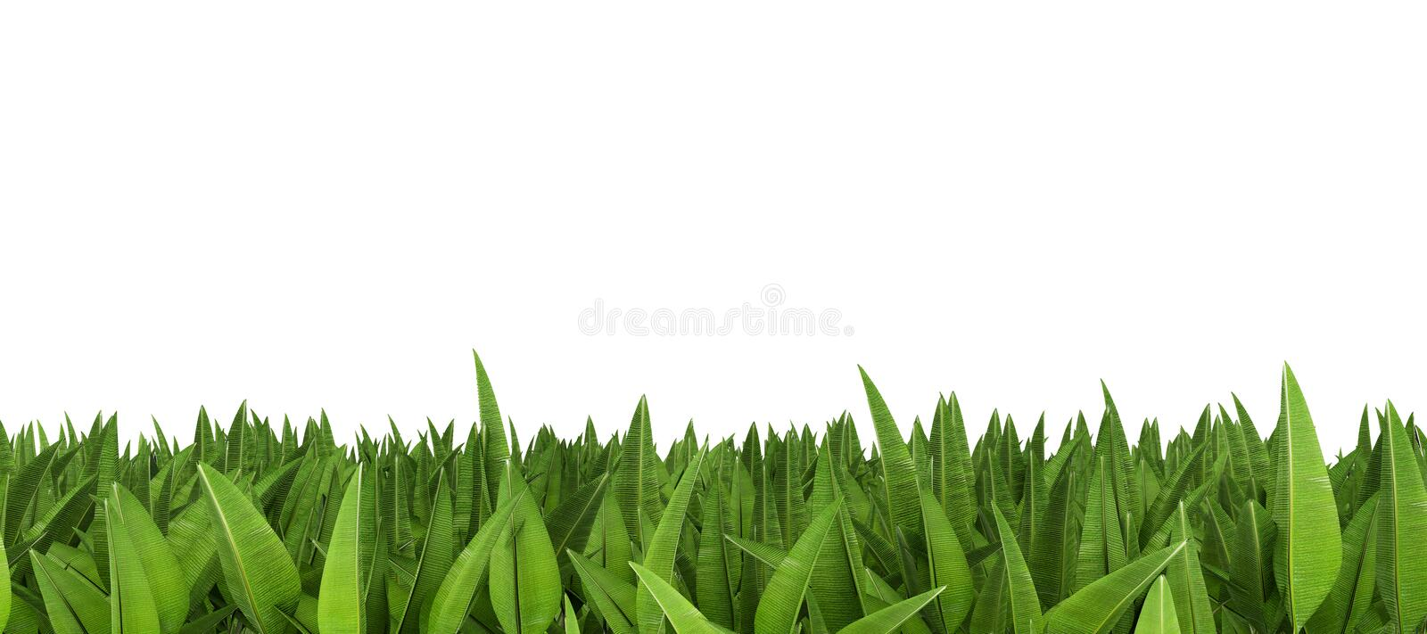 Line Of Tropical Leaves Royalty Free Stock Photos