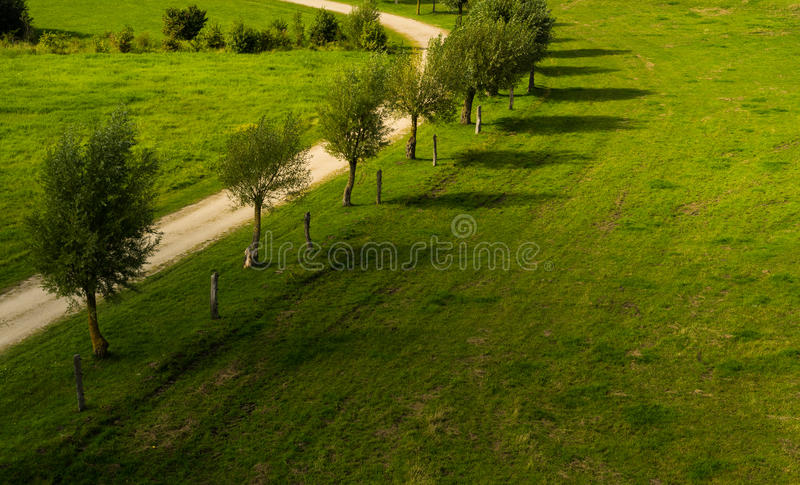 Line of young alley trees royalty free stock image