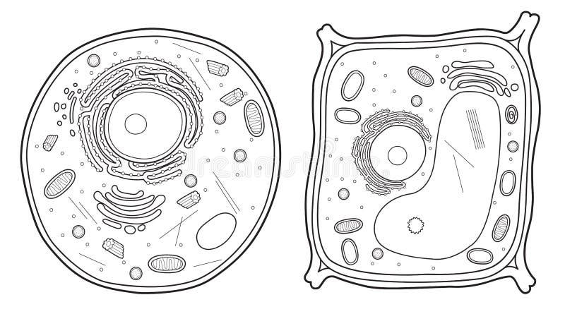 Linea cellulare animale della pianta e delle cellule illustrazione di stock
