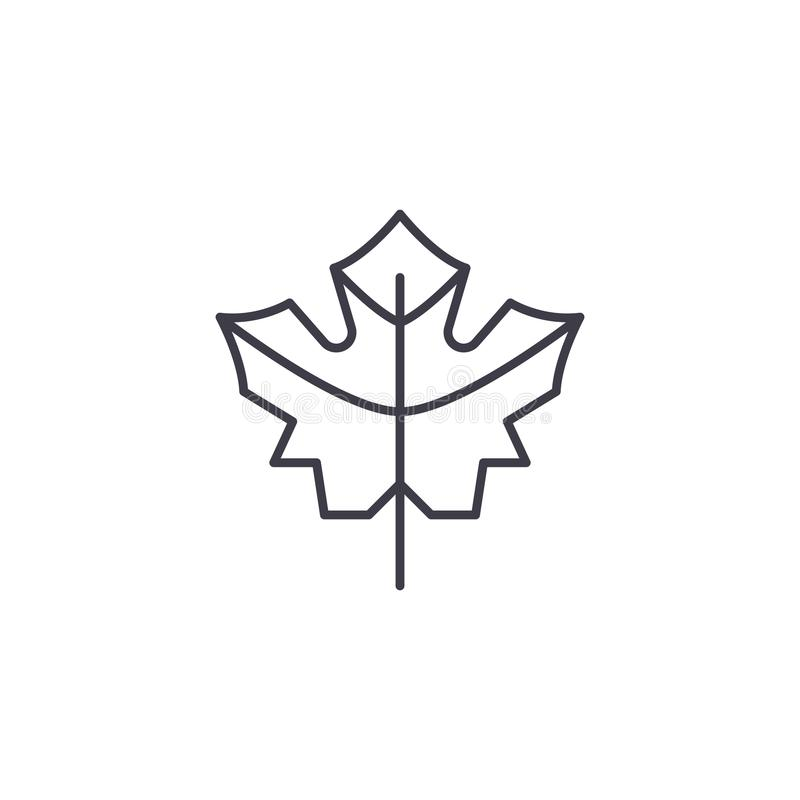 Linea concetto della foglia di acero dell'icona Segno piano di vettore della foglia di acero, simbolo, illustrazione illustrazione di stock