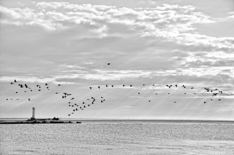 Linea costiera con gli uccelli.