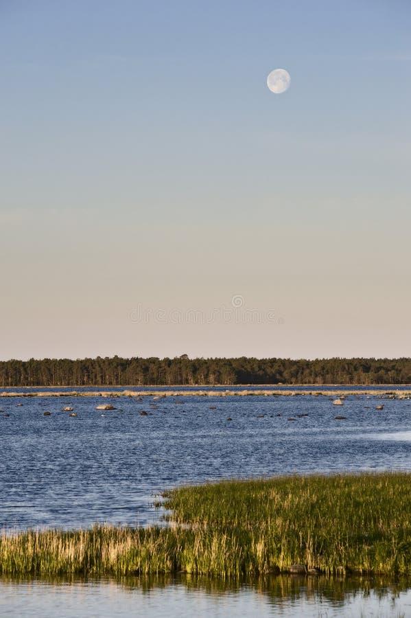 Linea costiera con la pietra e l'erba immagini stock libere da diritti