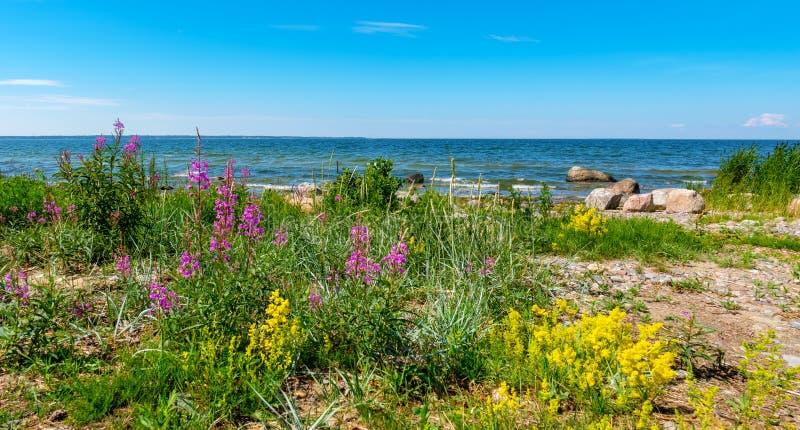 Linea costiera del Mar Baltico L'Estonia, UE fotografie stock