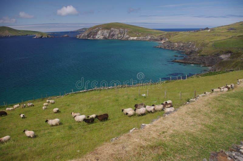 Linea costiera irlandese rurale fotografia stock libera da diritti