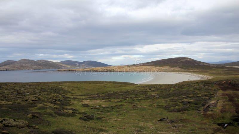 Linea costiera, spiaggia all'isola di Saunders, Falkland Islands fotografia stock libera da diritti