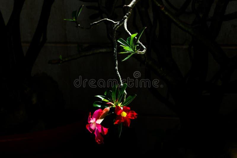 Linea del fiore immagine stock
