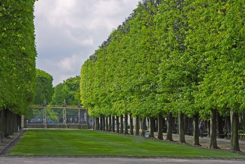 Linea del portone di giardino di Luxemborg di alberi immagine stock