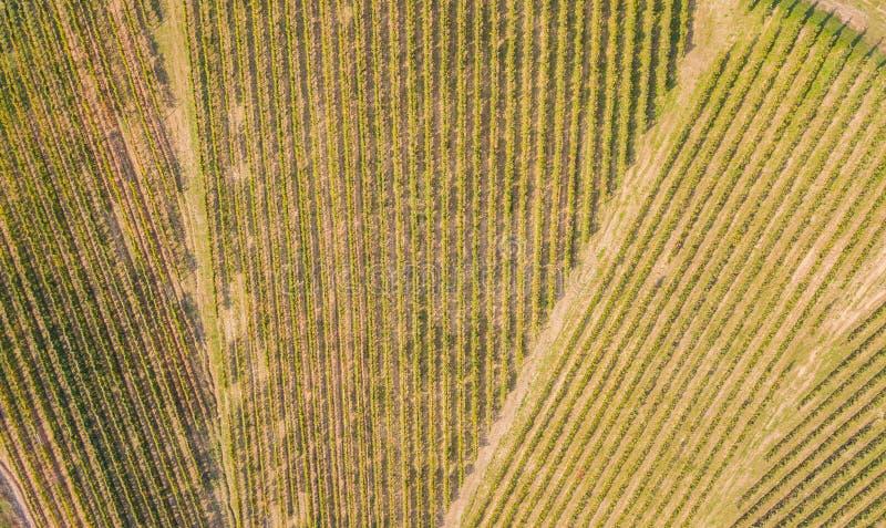 Linea del ` s della terra Una prospettiva verticale del fuco delle vigne Campi agricoli fotografia stock libera da diritti