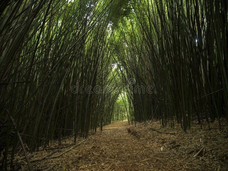 Linea di bambù foresta zenlike del sentiero per pedoni della natura di spiritualità della strada fotografia stock libera da diritti