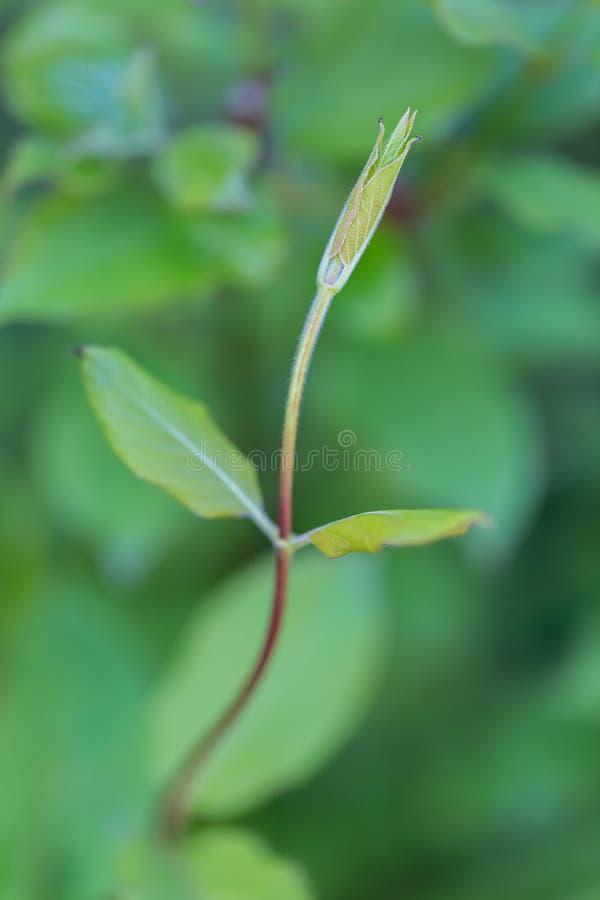Linea graziosa di piante verdi Fondo confuso con le foglie del fuoco molle fotografie stock libere da diritti
