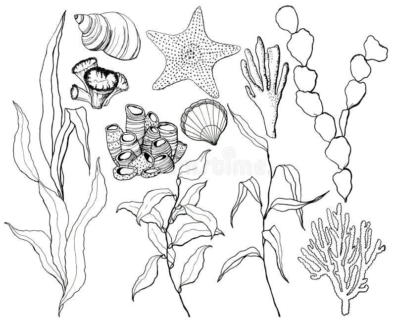 Linea insieme subacqueo di arte con le stelle marine, le coperture e le piante della barriera corallina Laminaria, coralli dipint immagine stock