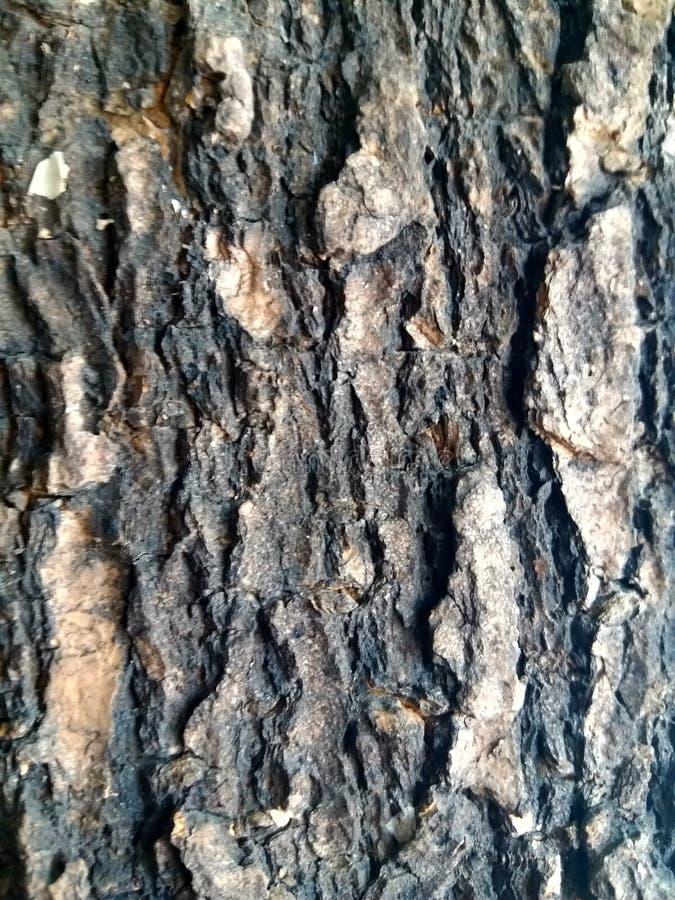 Linea modello su struttura della corteccia di albero fotografia stock