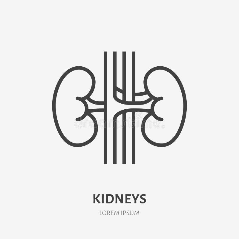 Linea piana icona dei reni Pittogramma sottile di vettore dell'organo interno umano, illustrazione del profilo per la clinica di  illustrazione di stock