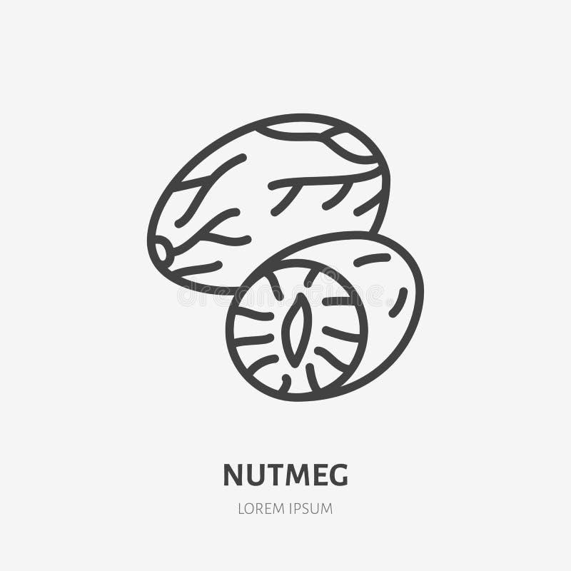 Linea piana icona della noce moscata Segno sottile di vettore del dado, illustrazione sana del profilo dell'alimento illustrazione vettoriale