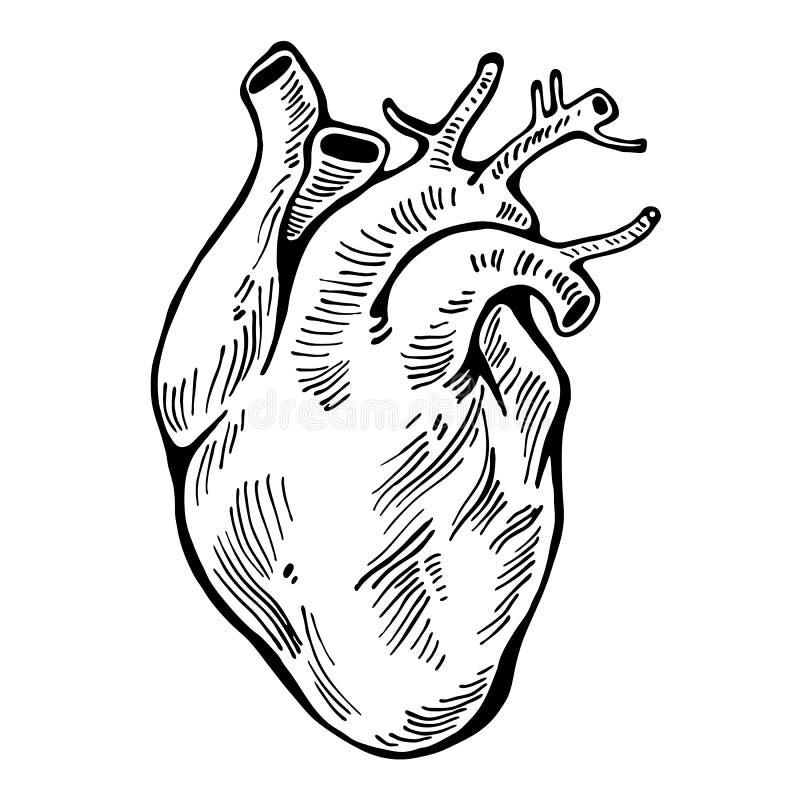 Linea umana del nero del cuore, tatuaggio Illustrazione di vettore illustrazione di stock