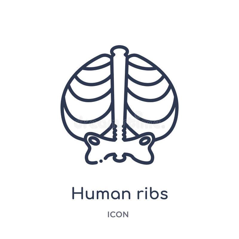 Lineair menselijk ribbenpictogram van de Menselijke inzameling van het lichaamsdelenoverzicht Het dunne pictogram van lijn mensel royalty-vrije illustratie