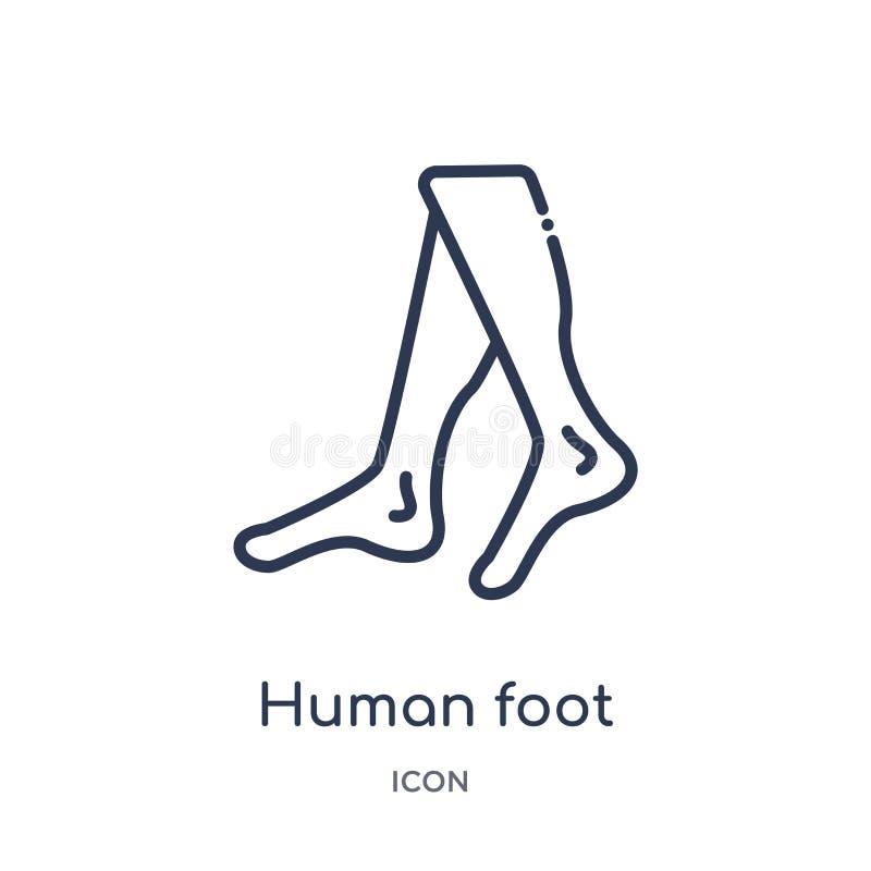 Lineair menselijk voetpictogram van de Menselijke inzameling van het lichaamsdelenoverzicht Het dunne pictogram van de lijn mense royalty-vrije illustratie