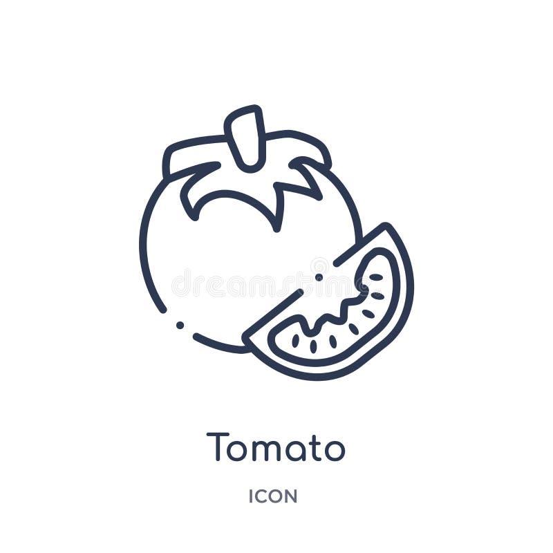 Lineair tomatenpictogram van Vruchten overzichtsinzameling Het dunne pictogram van de lijntomaat dat op witte achtergrond wordt g vector illustratie