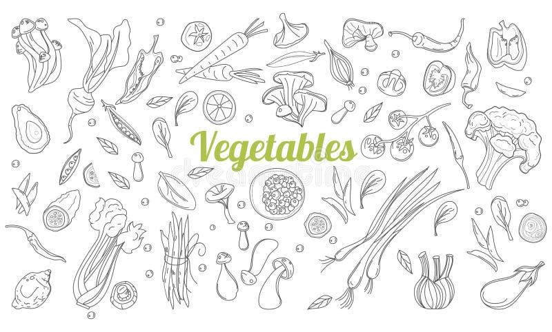 Lineaire grafisch De achtergrond van groenten Skandinavische stijl Gezond voedsel Vector illustratie Hand getrokken vruchten en stock illustratie