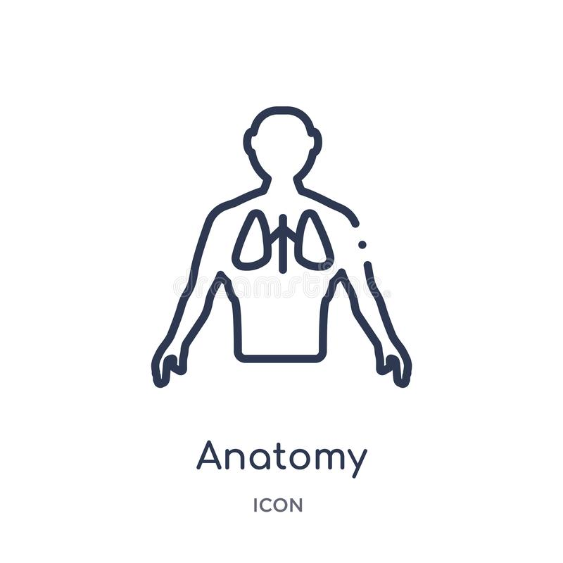 Linear anatomy icon from Gym and fitness outline collection. Thin line anatomy icon isolated on white background. anatomy trendy stock illustration