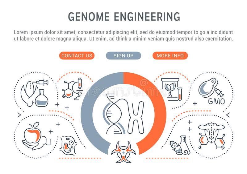 Linear Banner of Genome Engineering. Line banner of genome engineering. Vector illustration of the genetically modified organisms vector illustration