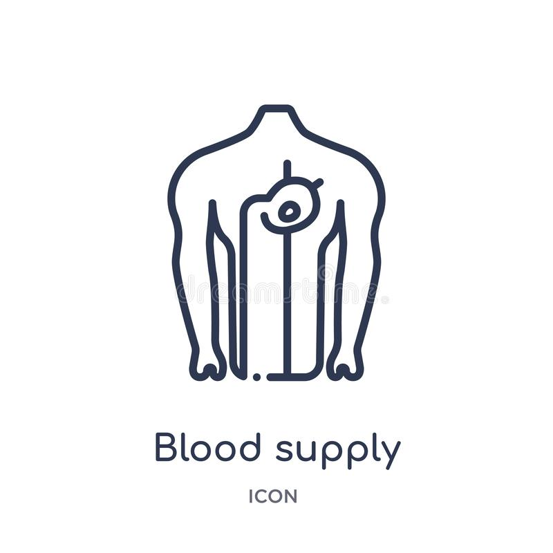 Linear blood supply system icon from Human body parts outline collection. Thin line blood supply system icon isolated on white royalty free illustration