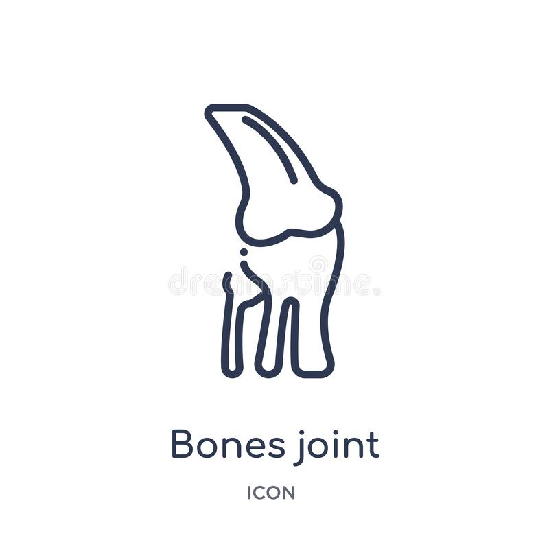 Linear bones joint icon from Human body parts outline collection. Thin line bones joint icon isolated on white background. bones stock illustration