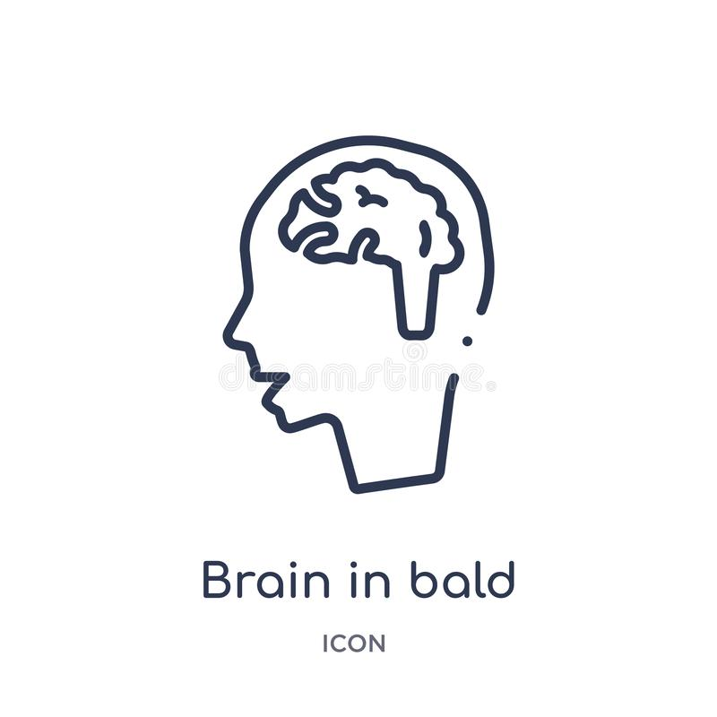 Linear brain in bald male head icon from Medical outline collection. Thin line brain in bald male head icon isolated on white royalty free illustration