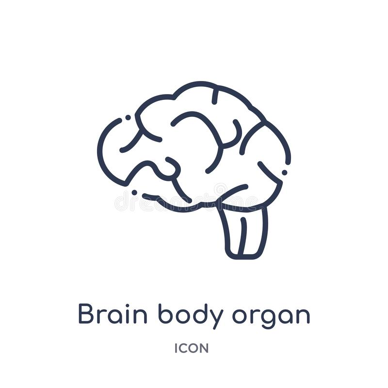 Linear brain body organ icon from Human body parts outline collection. Thin line brain body organ icon isolated on white stock illustration