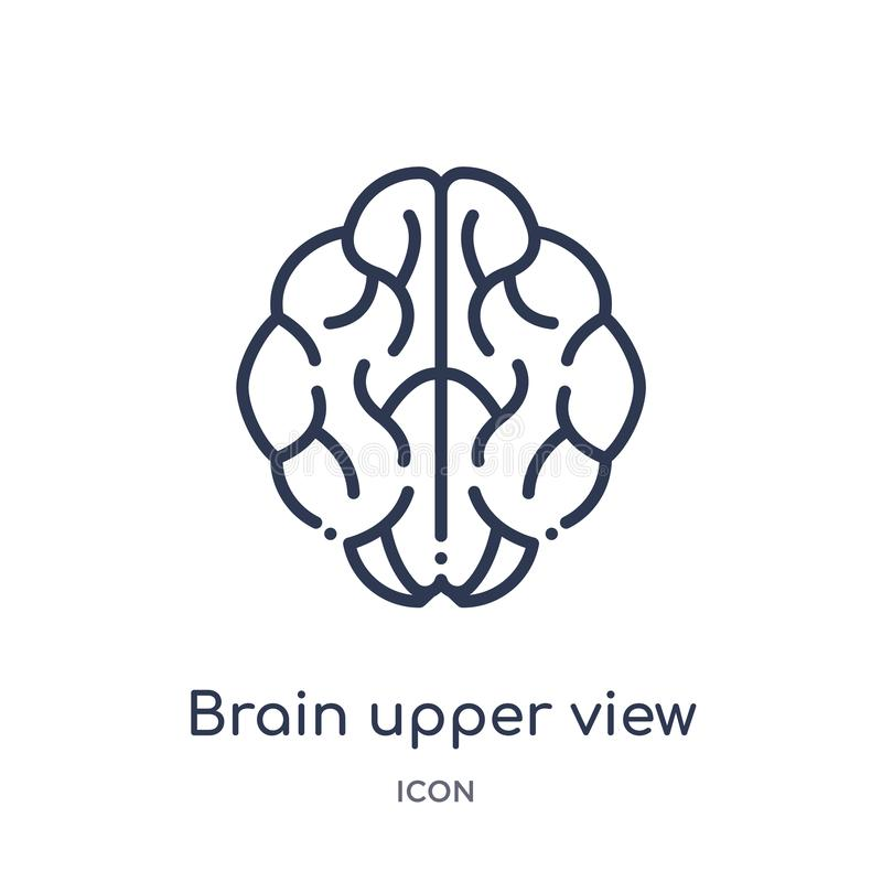 Linear brain upper view icon from Human body parts outline collection. Thin line brain upper view icon isolated on white royalty free illustration