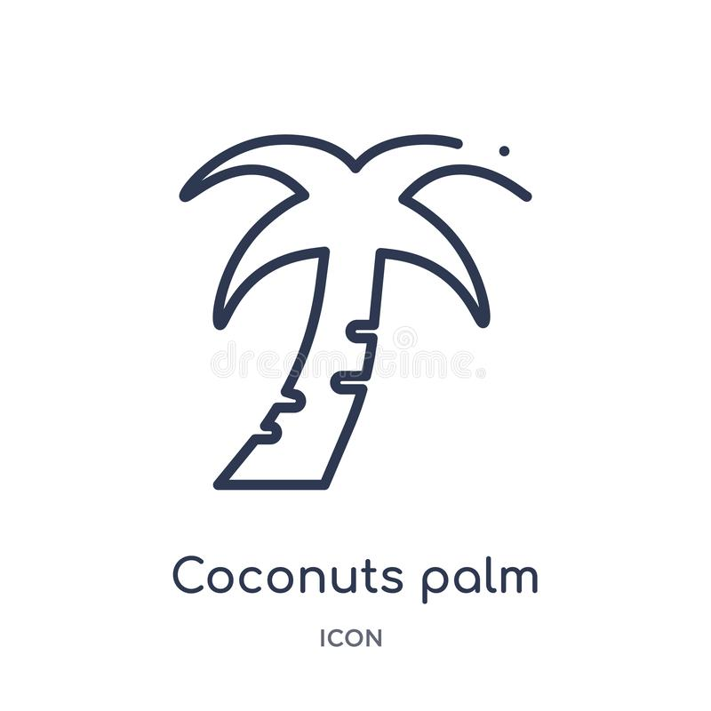 Linear coconuts palm tree of brazil icon from Culture outline collection. Thin line coconuts palm tree of brazil vector isolated vector illustration