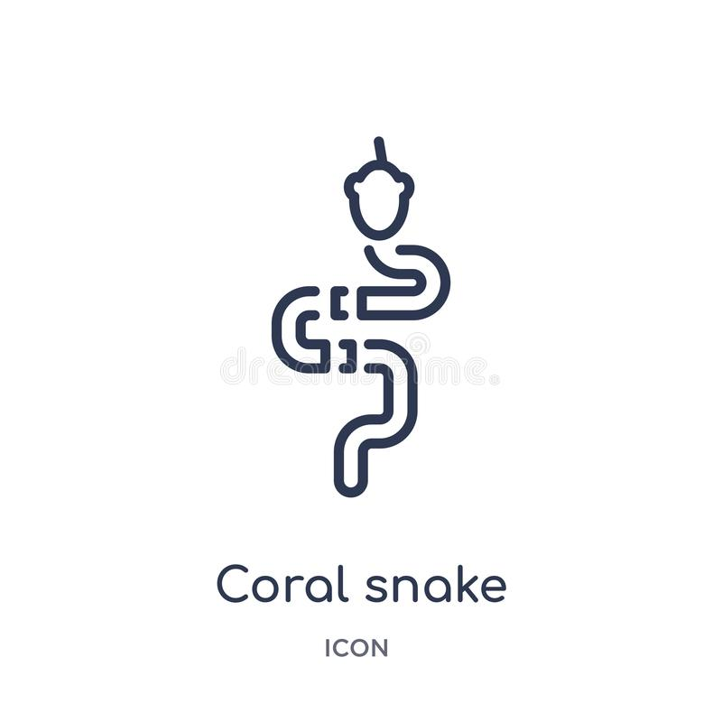 Linear coral snake icon from Animals outline collection. Thin line coral snake icon isolated on white background. coral snake stock illustration